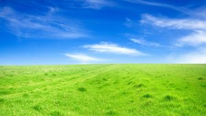 Green-grass-blue-sky_1920x1080