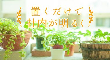 オフィスに置く観葉植物、その効果とは?