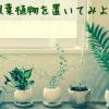オフィスにおすすめ!観葉植物を置いてみよう!